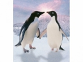 W2PL-PENGUINS-001_3700166641891
