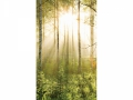 D3P-FOREST-003_3700166642065