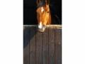 D3P-HORSE-001_3700166642058