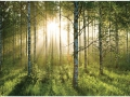 W4P-FOREST-003_3700166634886