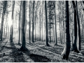 W4P-FOREST-004_3700166642867