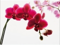 W4P-ORCHID-001_3700166639720