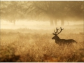 W4P-STAG-001_3700166643642